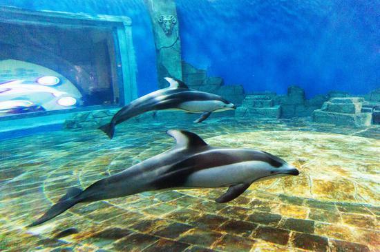 重庆汉海鲸豚湾水世界二期正式揭幕迎客 汉海海洋公园及水世界双园晚场7月4日同期开放