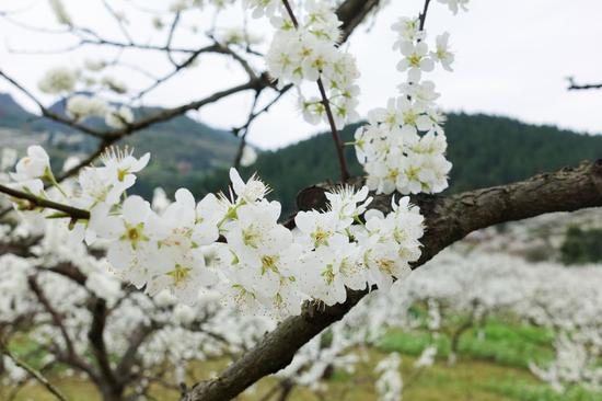 合川春季旅游节启幕 20项赏花摘果春游大餐等你来图2