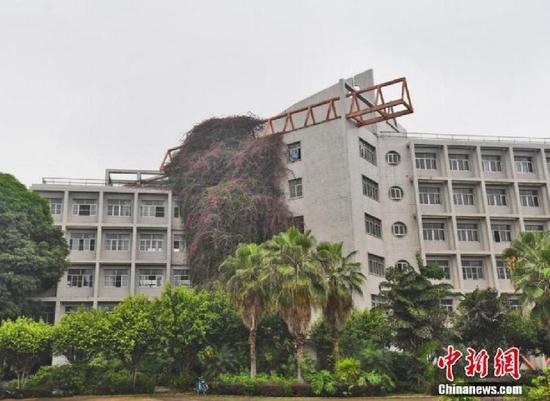 """广西现30米高""""鲜花瀑布"""" 飞流直下7层楼"""