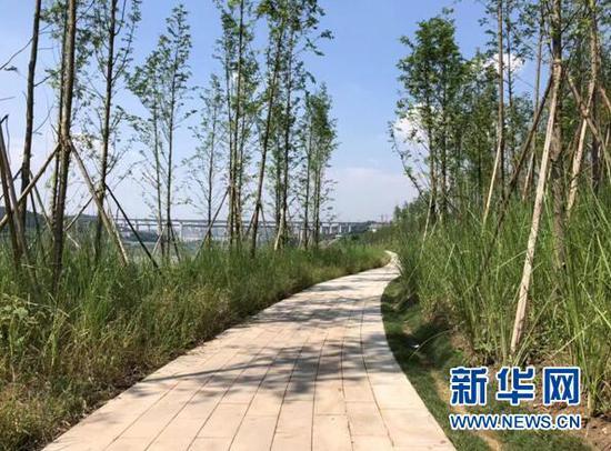 图为重庆市两江新区金海湾滨江公园集群内消落带现场照片。新华网 发(重庆市城市管理局供图)