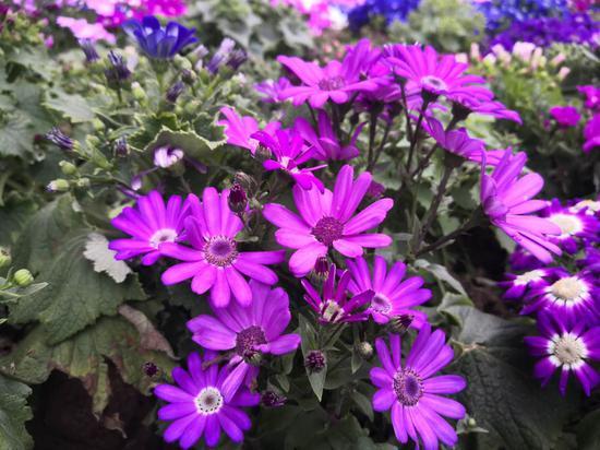 重庆花卉园春色渐浓 春天的脚步来了(图)