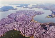 航拍离重庆最近的万亩花海奇观