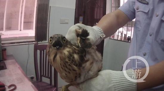 渝北警方民警提醒广大市民,平时生活中如遇类似珍惜野生保护动物