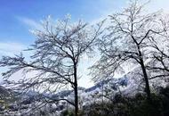 金佛山冰凌雾凇迷人眼
