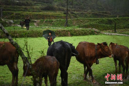 """重庆山区7岁""""放牛娃"""" 与87岁奶奶相依为命"""