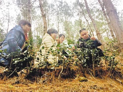 蒋汛(右一)与扶贫工作队队员在查看茶树的生长情况。