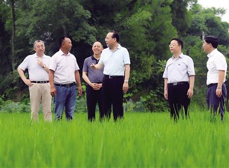 7月5日,市委书记孙政才在梁平区明达镇实地调研农业发展情况