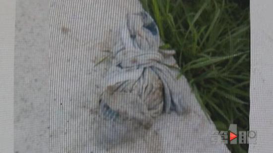 重庆:千斤鱼离奇死亡 水里打捞起一个农药包