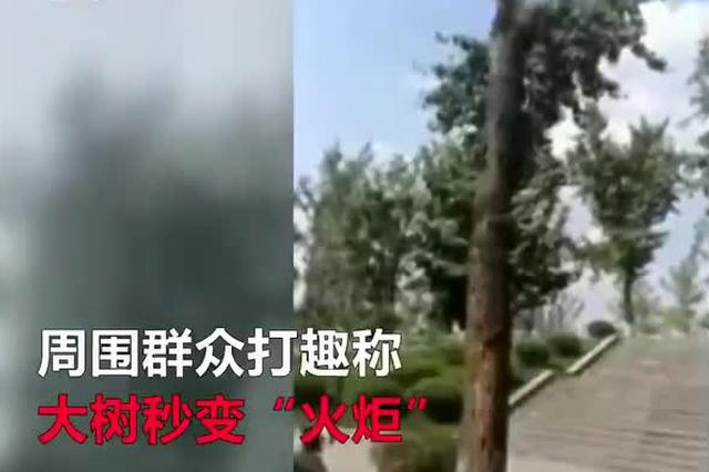 """秋老虎肆虐! 银杏树不敌酷暑自燃秒变""""火炬"""""""