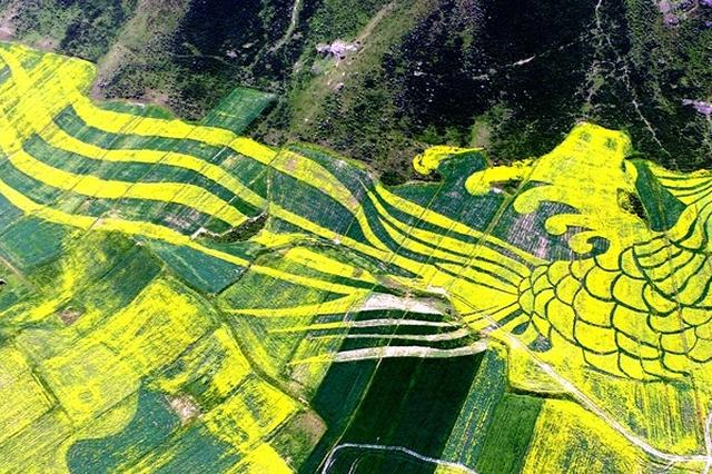 南川 打造油菜花海 助力乡村旅游