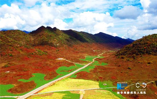 重庆红池坝湿地之秋 红叶靓丽的风景线