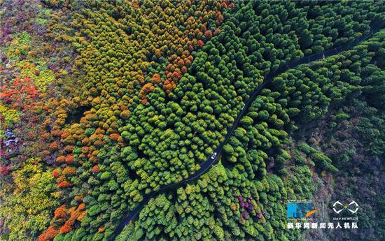 国家喀斯特生态公园 生态石林醉游人