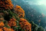 重庆金佛山层林尽染美景如画