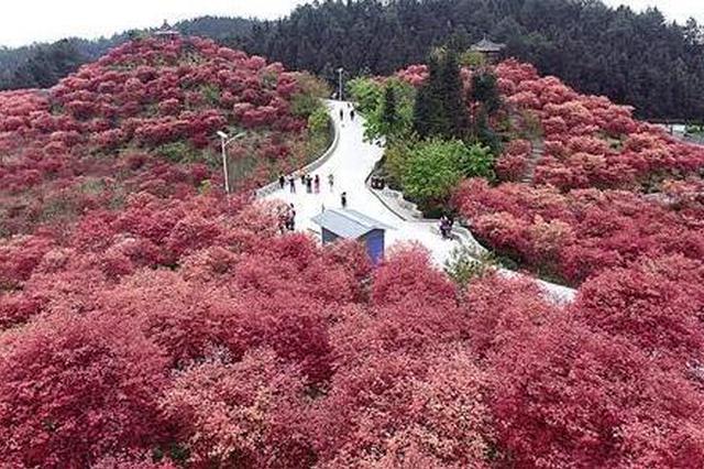 春到重庆 这些山清水秀美丽之地颜值高