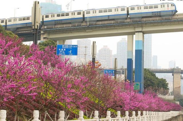 """重庆交通执法用大数据为高速路运行""""画像"""""""