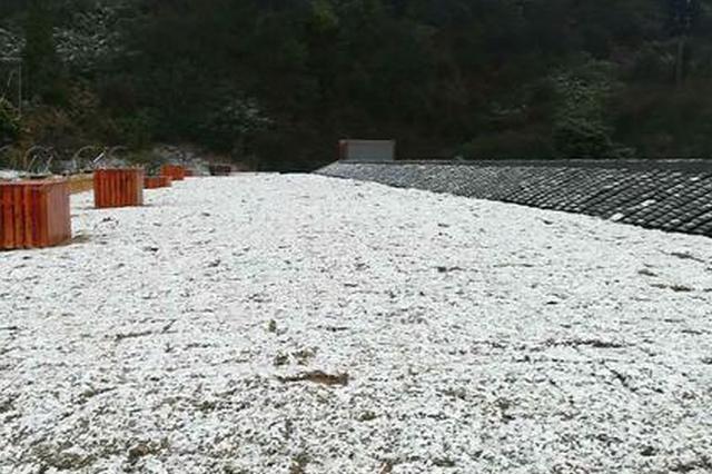 春分时节雪纷纷 重庆金佛山下雪了