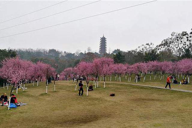春光明媚 照母山森林公园成市民春游首选地