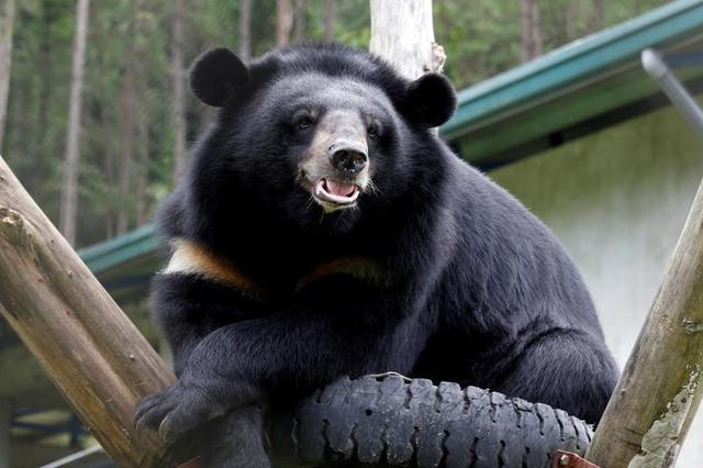 重庆食药监局通报:这些熊胆制品被勒令停止销售