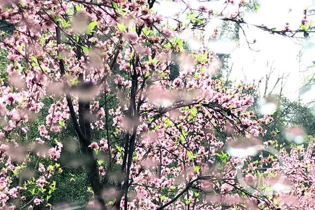 重庆天气:周六降温降雨继续 周日天气有望好转