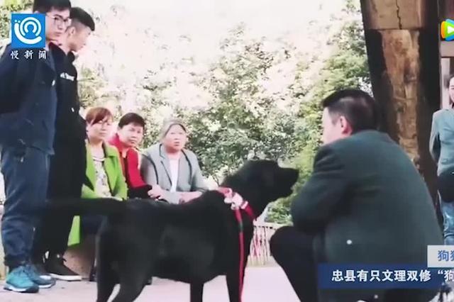 """重庆一只""""神犬"""" 会加减乘除懂汉字笔画"""