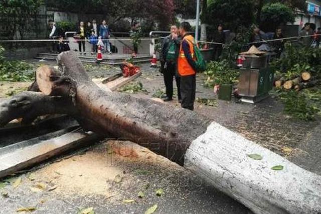 渝中区一公交站因大树倒塌被压垮 无人员伤亡(图)