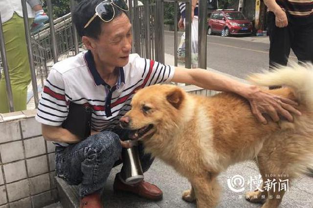 李子坝有只网红狗 无论天睛下雨都在车站等主人回家