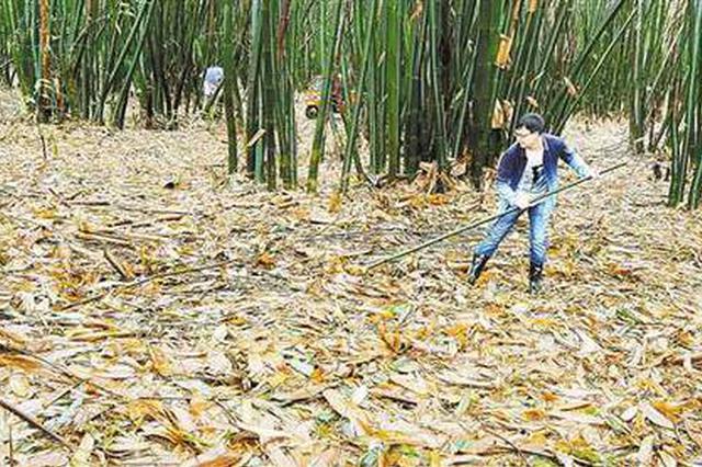 潼南陈溪养殖场 猪粪水经地下管道直排涪江岸边