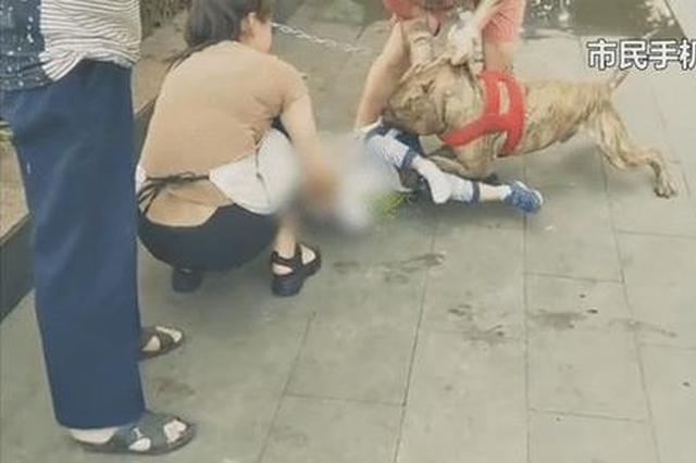 惊魂!重庆4岁男童被猛犬咬住不松口 众人犬口救人