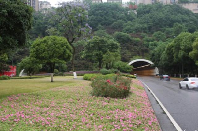 繁花似锦成网红地。 江北区园林绿化管理所供图