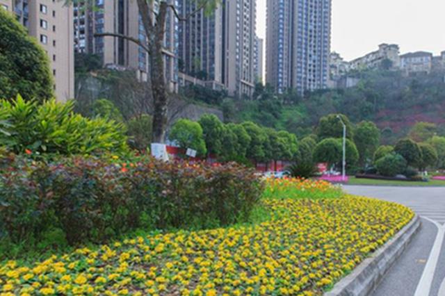 """重庆主城道路景观""""颜值""""提升 城市处处皆景"""