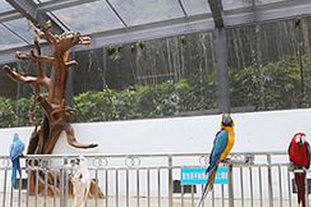 """这里有一群""""网红""""在等你 重庆动物园鹦鹉苑开放"""