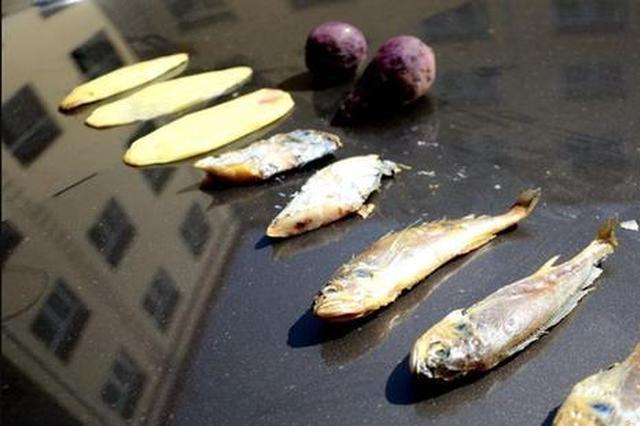 山东滨州气温直逼40度 汽车引擎盖能烤鱼