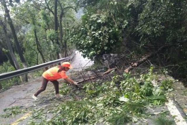 渝北:强对流天气来袭 多处行道树断裂