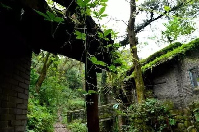 缙云山自然保护区内130处违章建筑被拆除
