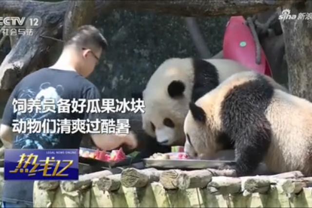 重庆:吃西瓜啃冰块吹空调 动物花式避暑