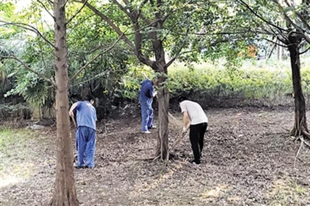 大学生小张在渝北一小区做暑期工,和师父一起清理落叶。