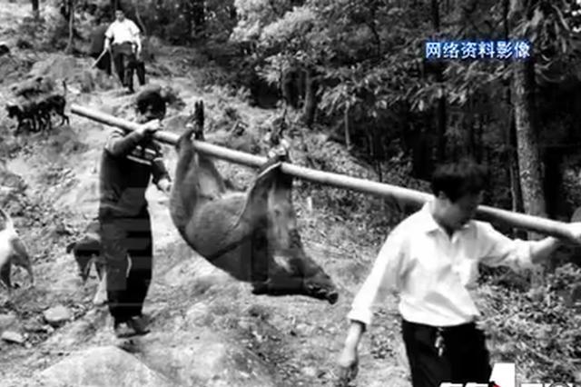"""自家田里来了条""""大水牛"""" 村民凑近一看吓坏了:野猪"""