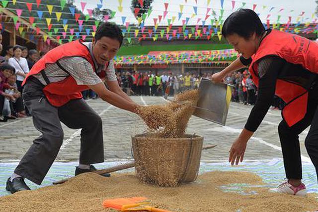 收谷子、掰玉米、舂糍粑 重庆市民体验农活庆丰收