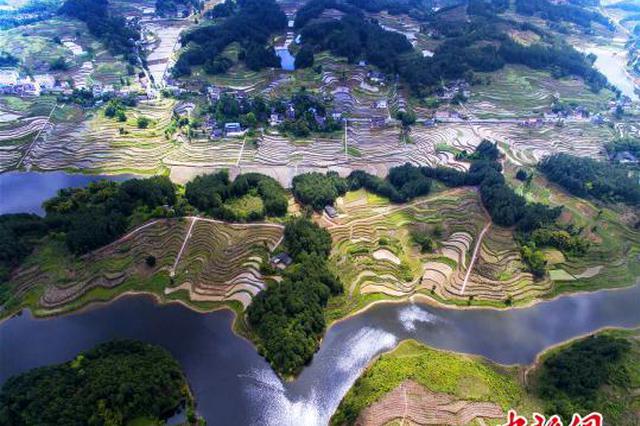 """重庆""""定制水稻""""上餐桌 农户客户""""双丰收"""""""