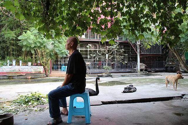 重庆老人庭院内搭舞台 与猫狗天鹅共赏患癌妻子跳舞