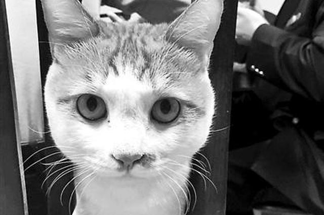 重庆工商所有只网红调解猫 常在调解室缓解气氛
