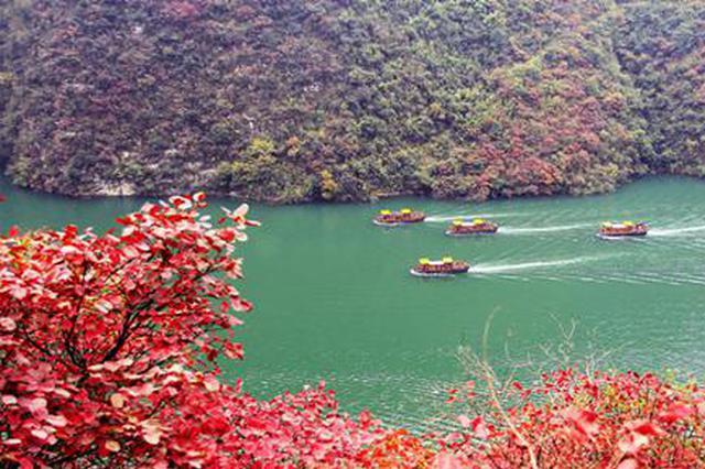 巫山推出14条精品线路 全方位欣赏烂漫红叶
