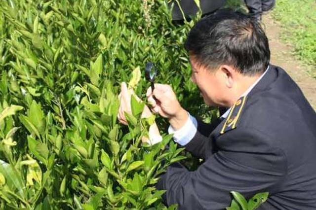重庆修订植物检疫条例 明晰各类主体检疫责任划分