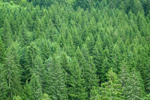 重庆截止11月完成营造林523.7万亩