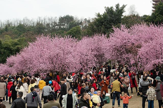 主城各种春花相继绽放 正是踏春赏花好时节