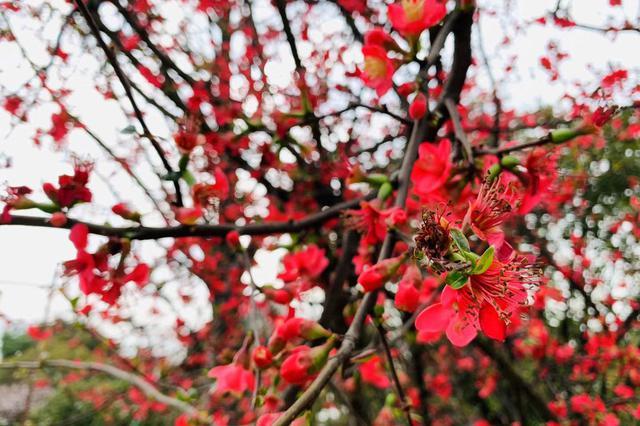 重庆推出81条春季乡村精品旅游线路