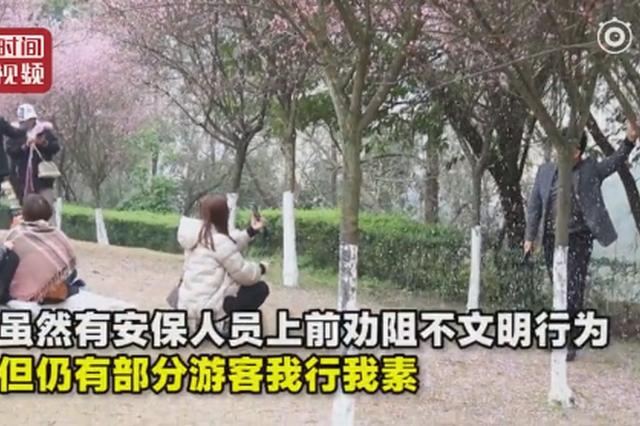 公园游客为拍花瓣雨疯狂摇树 工作人员:树被摇松了