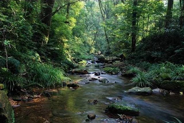 重庆18处森林旅游地国际森林日期间免费开放