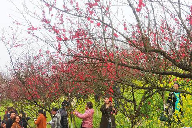 三月出游去哪儿?到九龙坡走马古镇看千亩桃林
