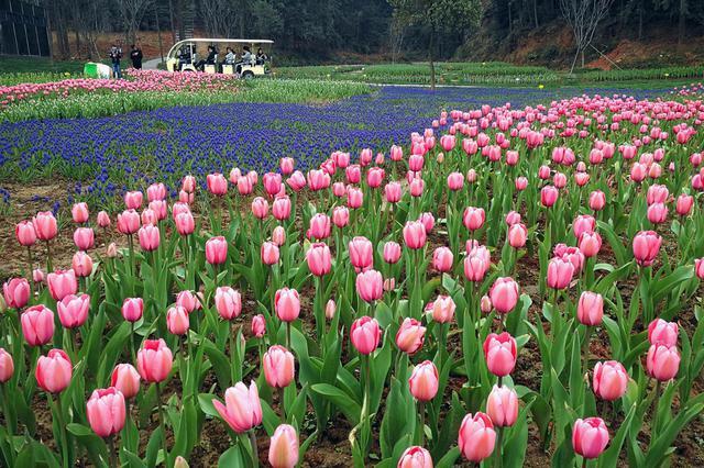 重庆推出160多项活动 邀你赴一场春季文旅之约